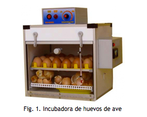 incubadora de huevos de ave