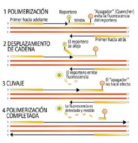 PCR en Tiempo Real